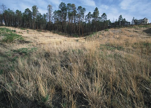 Land begins to recover one year after emergency reseeding following the Los Alamos fires in New Mexico. Some of the species planted for erosion control and habitat improvement were prairie junegrass, slender wheatgrass, mountain brome, three awn, gambel's oak and mountain mahogany.