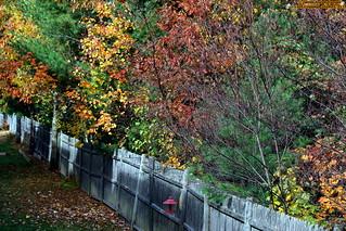 IMG_3186 Property fence