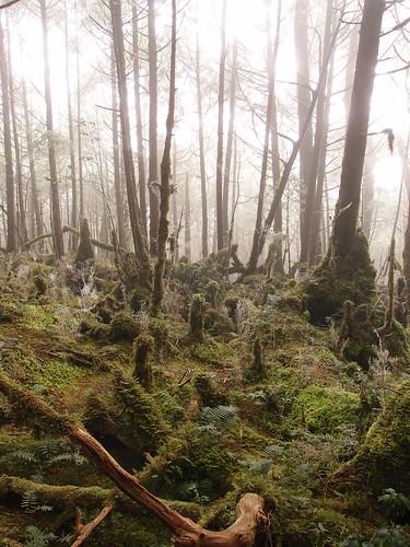 圍繞著翠峰湖而建的環山步道,有一方小天地名為「奧陶紀苔原」,此處終年環境音僅23~24dB。攝影:詹嘉紋。