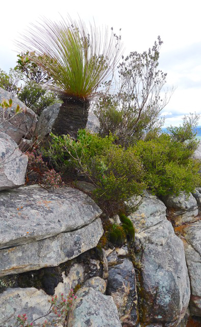 It's a tough but beautiful ecosystem on the exposed slopes of the Grampian Ranges