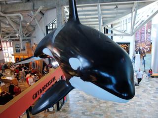 DSC26623, Monterey Bay Aquarium, California, USA