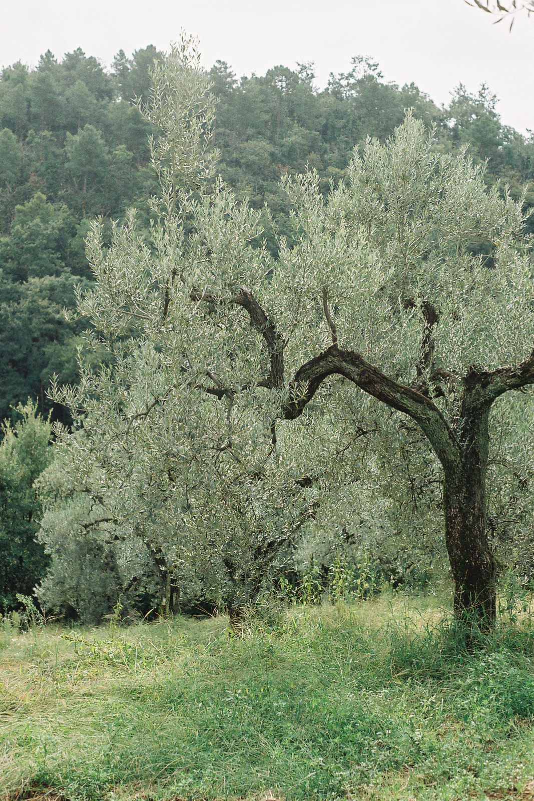 tuscany on film