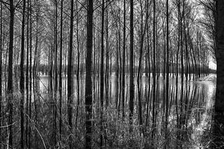 _MG_6528 La Charente est sortie de sont lit