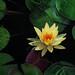 Lotus Flower Fractal Balboa Park by jsbanks42