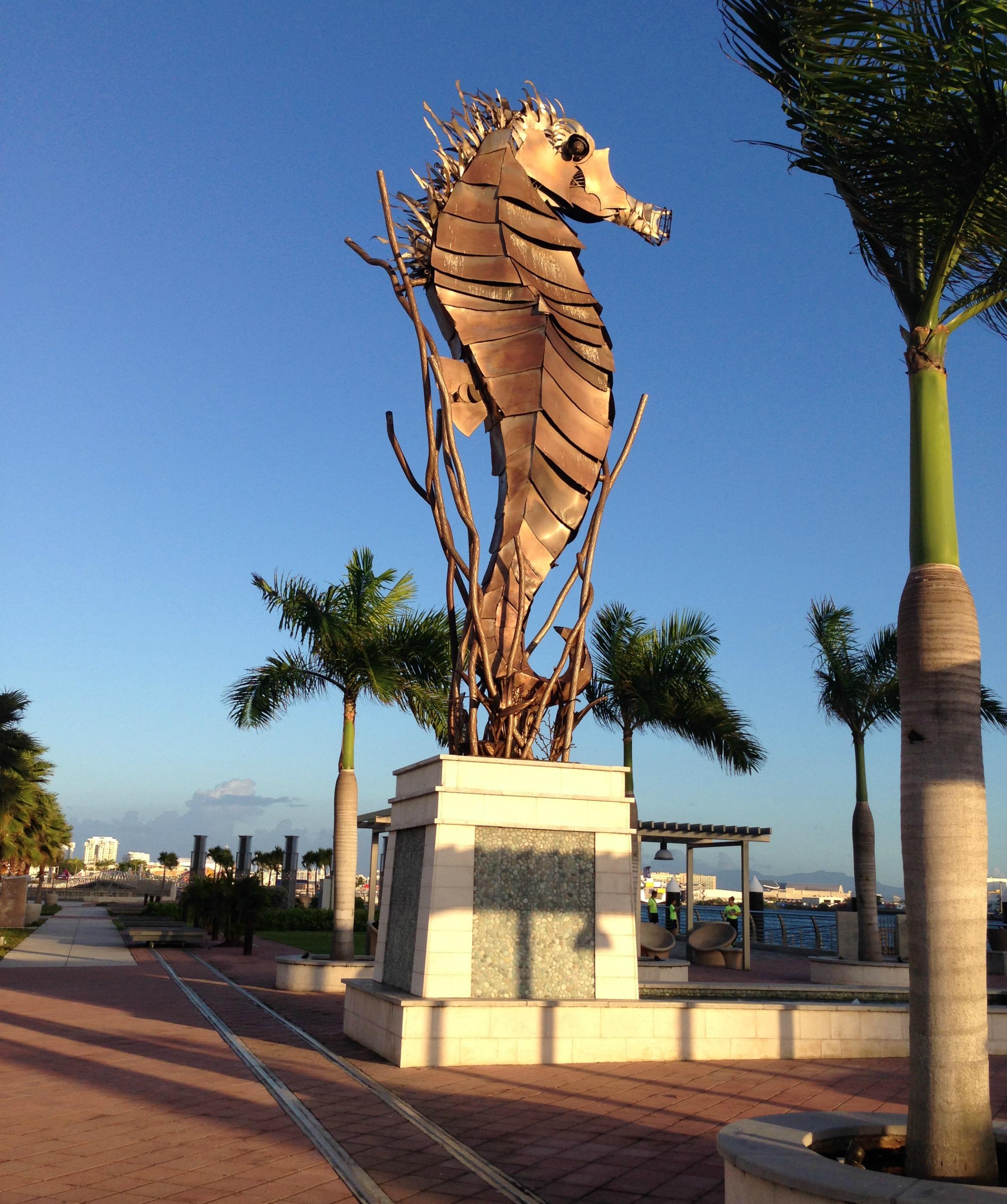 seahorse bahia urbana san juan puerto rico
