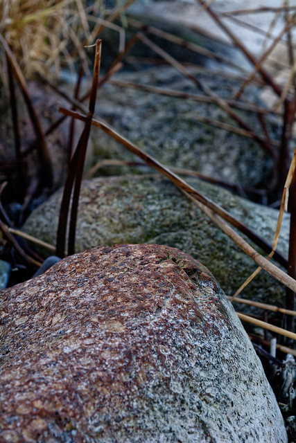 Agrusoft Webdesign Photopage - Rocks And Reed