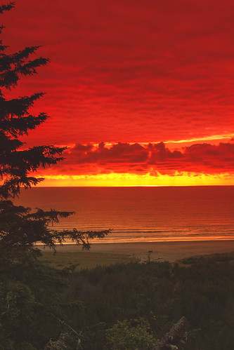 ocean statepark sunset red portrait reflection tree beach beautiful yellow clouds spectacular golden twilight marine colorful awesome horizon shoreline surreal peaceful pacificocean sensational inspirational spiritual sunrays sublime washingtonstate magical magnificent inspiring longbeachpeninsula canonshooter washingtonstatephotography americanphotograph robertbales northamericanphotography haybalessilhouette statparkphotography wavessunsetphotography