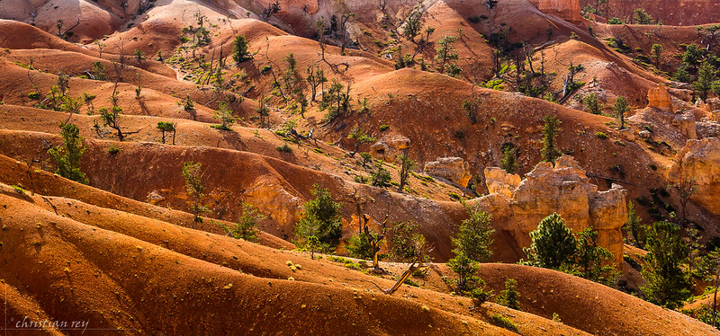 Bryce Canyon National Park: ocher's color, Utah, USA