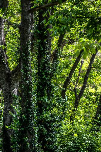 trees kentucky campsite frankfortkentucky pamschreckcom photographerpamelaschreckengost elkhorncampground ©pamelaschreckengost