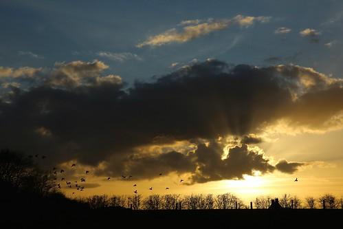 sunset sky sun bird tramonto cielo sole