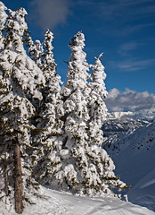 Snowy Trees Over Crystal Bowl