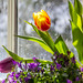 Indoor Spring by Kar Amen