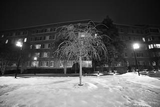 frosty little tree