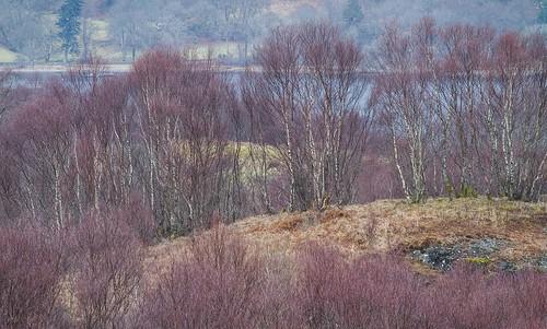 Scotland Achnacloich