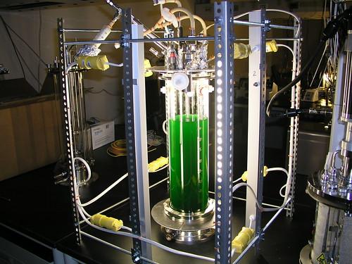 Synechococcus sp. PCC 7002 in a Bioreactor