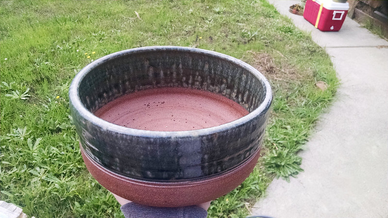 New pot for pygmy garden.