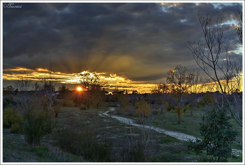 sunset 35mm atardecer nikon comunidaddemadrid trescantos 365fotos 365project proyecto365 parquedelosalcornocales nikond3100