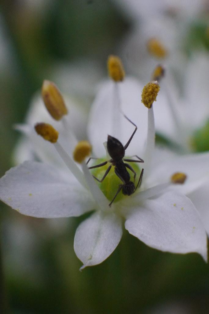 Ant Activity