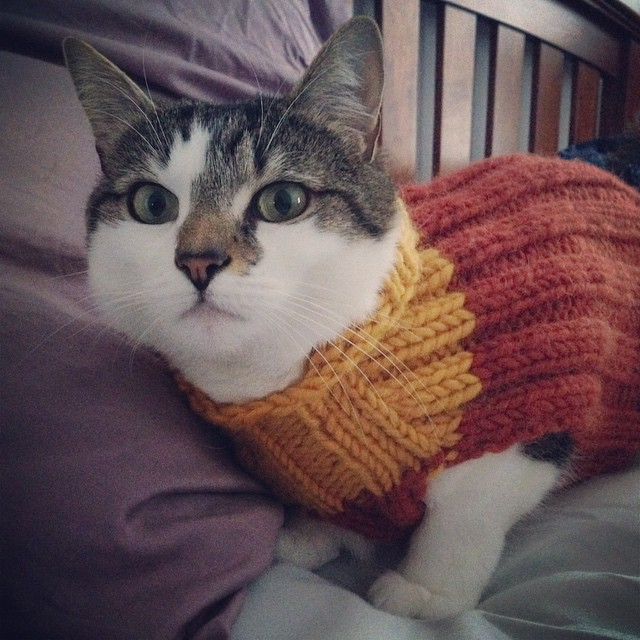 I should probably turn up the heat in the house when the cats start wearing their winter sweaters.