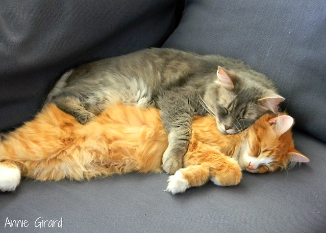 Intimate love cat