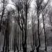 Árboles, nieve by Fermin Pagola