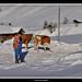 Swiss Mountainlife