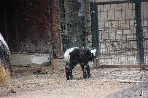 Sonntags Besuch im Zoo Berlin 25.01.2015 35