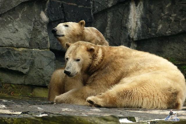 Tierpark Berlin 07.02.2015   205