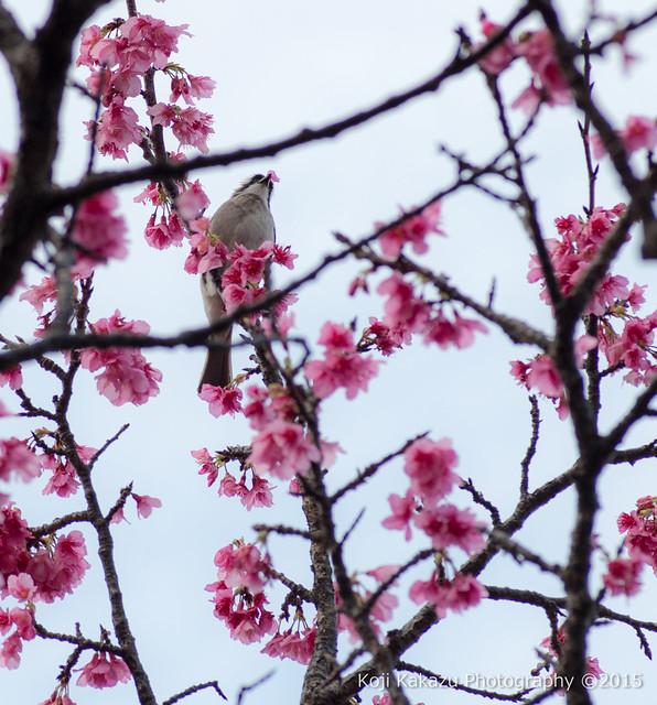 与儀公園 | Naha City, Okinawa 03