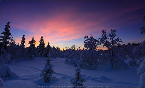 trees winter summer sky snow color nature norway canon frank landscape vinter natur arctic nordnorge sne mkii harstad troms landskap andreassen arktisk nettfoto