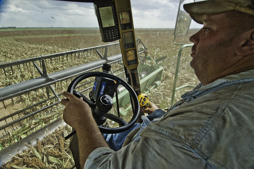 A farmer in Navasota, Texas uses modern technology to navigate a harvester through his wheat sorghum crop.