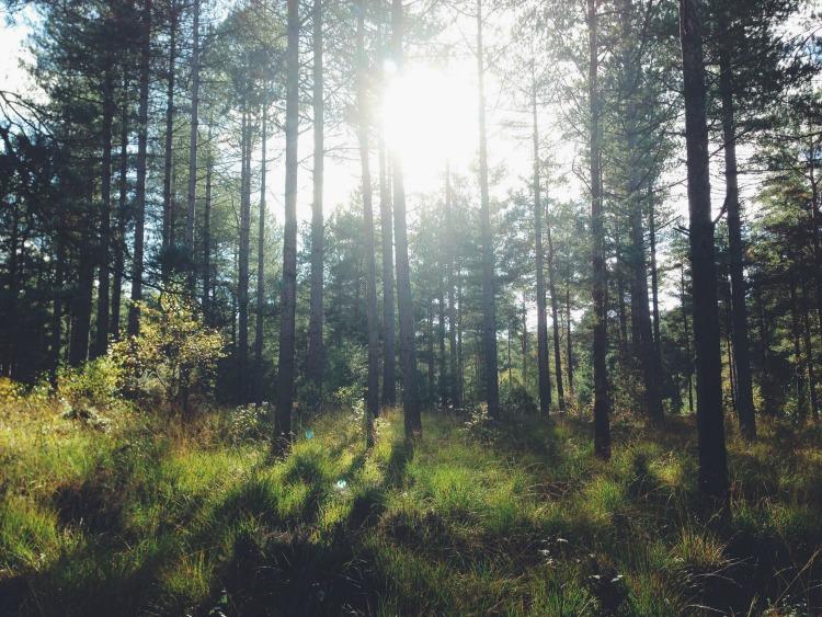 woody woods