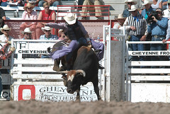 animal sports, rodeo, bull, event, sports, bull riding,