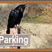 Custom Parking by vinamaster