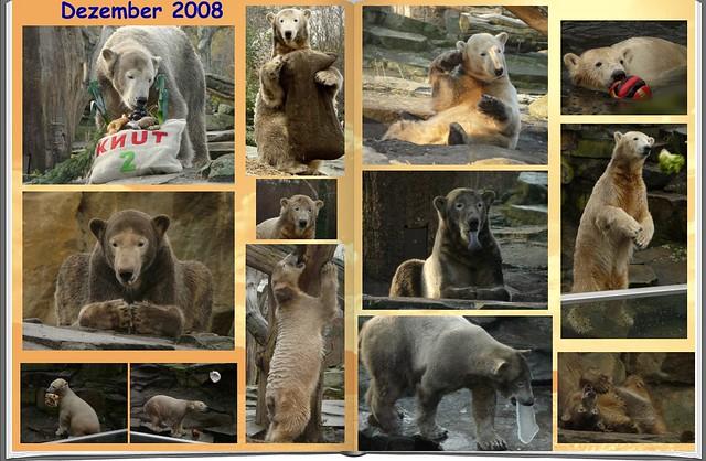 2008_12 Eisbär Knut