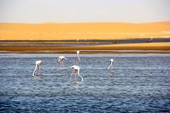 Walvis Bay & Swakopmund