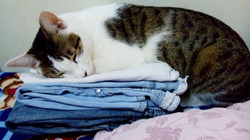 阿貴貓咪  貓咪睡姿6870061664206_480617796_o