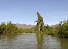 Rio Mayo DSC02585focPr