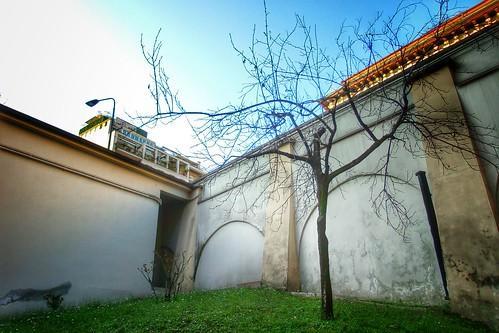 L'albero può e deve crescere ovunque! by Ylbert Durishti