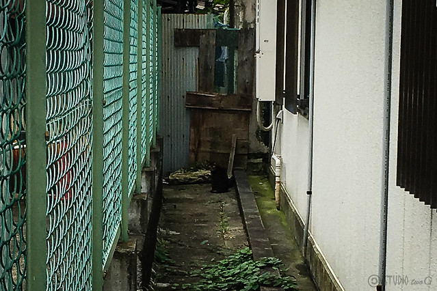 Today's Cat@2016-07-10