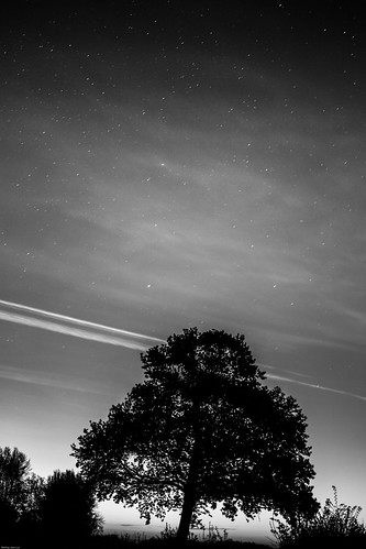 hazebrouck nordpasdecalaispicardie france noiretblanc blackandwhite bw canon eos 1100d landscape paysage night nuit tree arbre sky ciel star étoile étoiles stars sunrise leverdesoleil nuages clouds contrails silhouette quiet outdoor nature rural serene sérénité outside dehors bnw digital ef35mmf2 blackwhitephotos blackwhite
