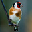 the Birdwatching in Portugal group icon