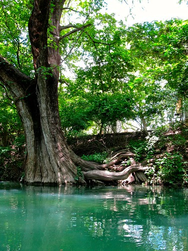 trees creek texas roots springs rivers cypress streams wimberley carlzeiss groundwater interrelationship surfacewater