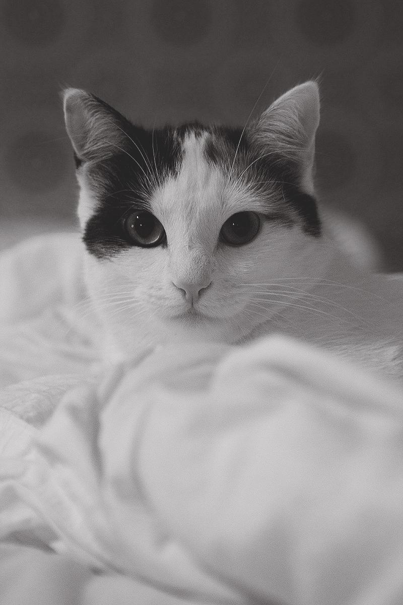 modelcat2