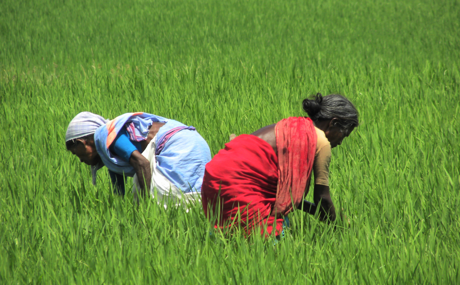 methods of cultivation in india