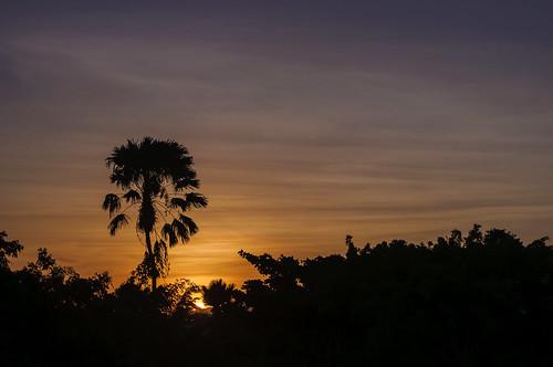 sunset silhouette brasil nikon ngc fortaleza ceara nordeste naturesfinest 55200mm coth f456 supershot d5000 nikond5000 afsdxvrnikkor55200mmf456gifed arthurperruci nanaturezainnature