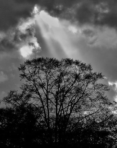 Ciel - Sky