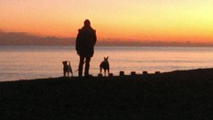 Www.Harrisons-dogs.co.UK #dogwalker #Clapham #claphambuzz  #Balham   At the beach in st Leonard's Love sunset walks by the sea.