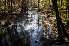 A walk in the Maryland woods