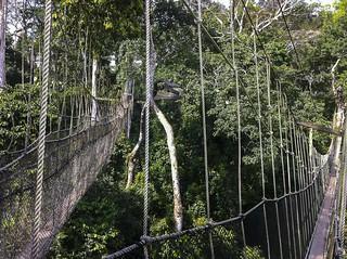 Canopy Walkway - Kakum NP - Ghana14_IMG_0805
